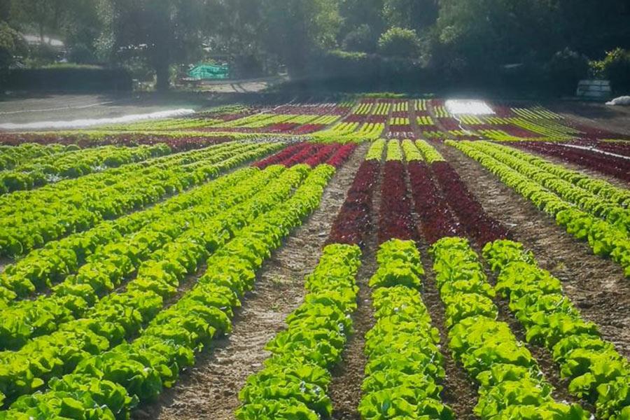Erntefrisches Gemüse bei EDEKA Sommer